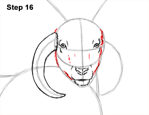 How to Draw Jacob Sheep Four Horns Ram 16
