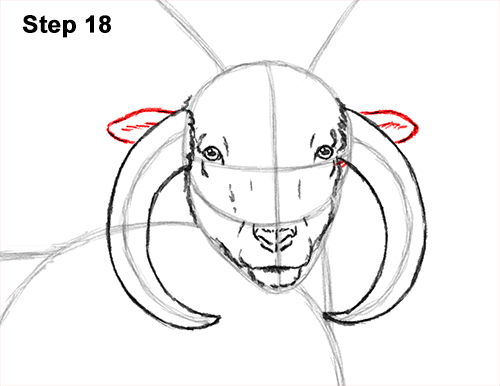 How to Draw Jacob Sheep Four Horns Ram 18