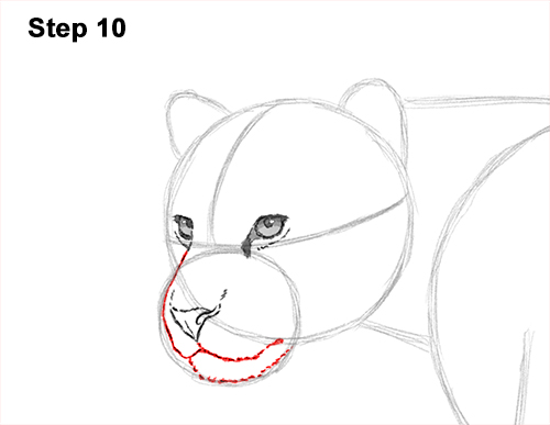 Draw Jaguar Big Cat 10