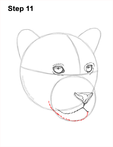 How to Draw a Jaguar Head Portrait Face 11