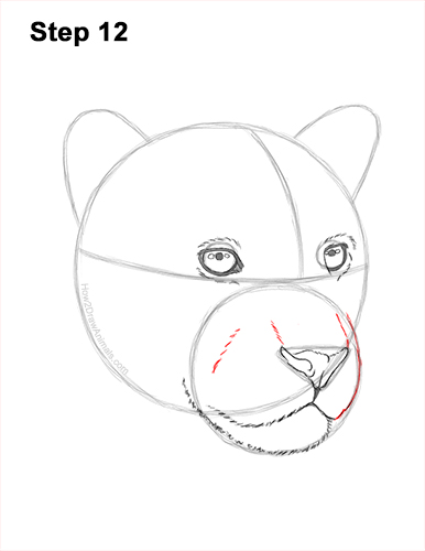 How to Draw a Jaguar Head Portrait Face 12