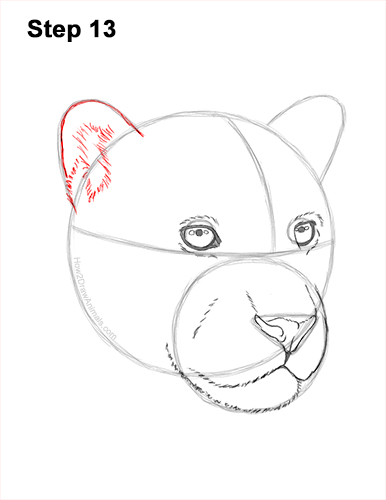 How to Draw a Jaguar Head Portrait Face 13