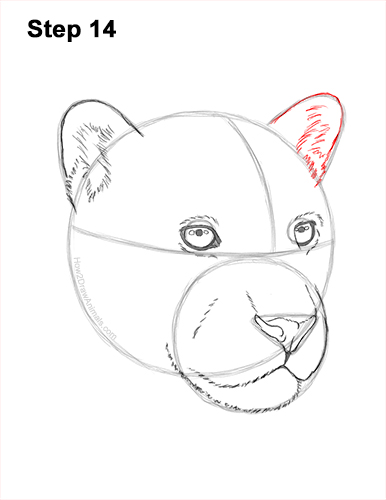 How to Draw a Jaguar Head Portrait Face 14