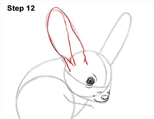 How to Draw Long-Eared Jerboa 12