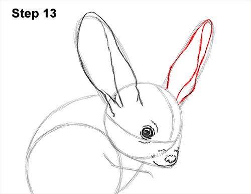 How to Draw Long-Eared Jerboa 13
