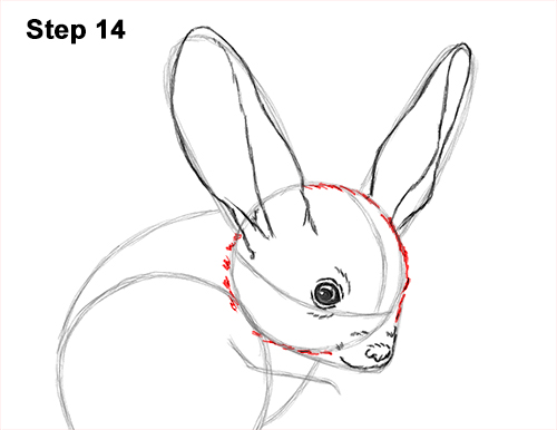 How to Draw Long-Eared Jerboa 14