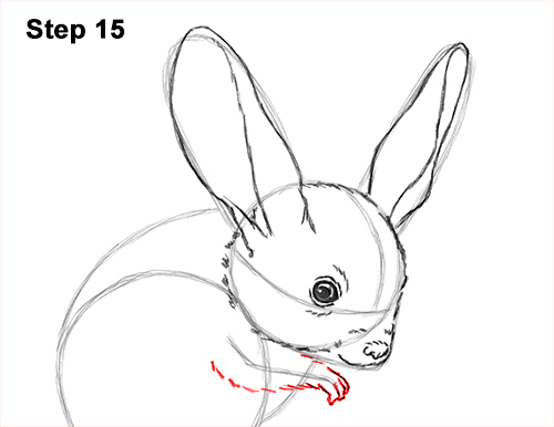 How to Draw Long-Eared Jerboa 15