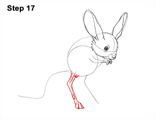 How to Draw Long-Eared Jerboa 17