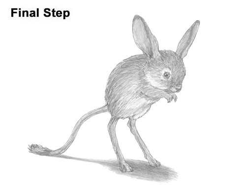 How to Draw Long-Eared Jerboa