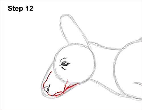 How to Draw a Red Kangaroo Jumping Hopping Leaping 12