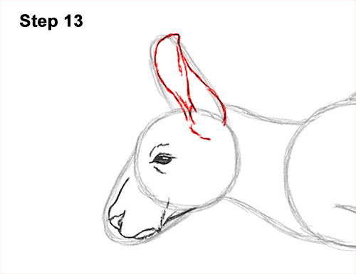 How to Draw a Red Kangaroo Jumping Hopping Leaping 13