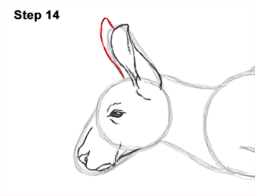 How to Draw a Red Kangaroo Jumping Hopping Leaping 14