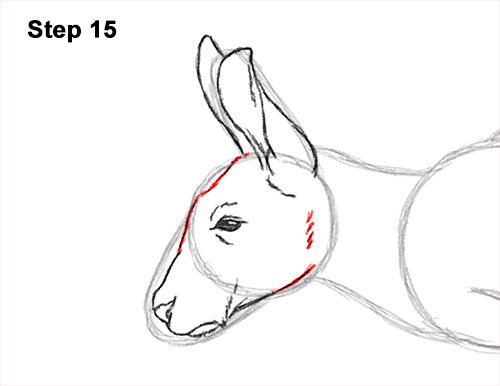 How to Draw a Red Kangaroo Jumping Hopping Leaping 15