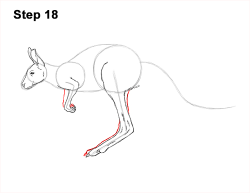 How to Draw a Red Kangaroo Jumping Hopping Leaping 18