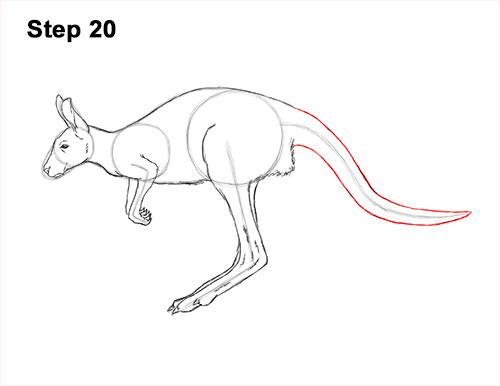 How to Draw a Red Kangaroo Jumping Hopping Leaping 20