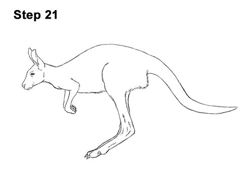 How to Draw a Red Kangaroo Jumping Hopping Leaping 21
