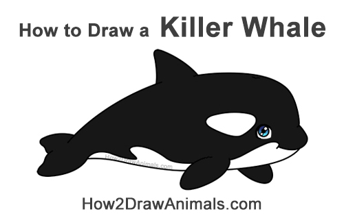 How to Draw a Cute Cartoon Killer Whale Orca Chibi Kawaii