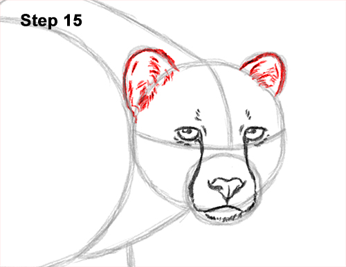 How to Draw a How to Draw a King Cheetah Walking 15