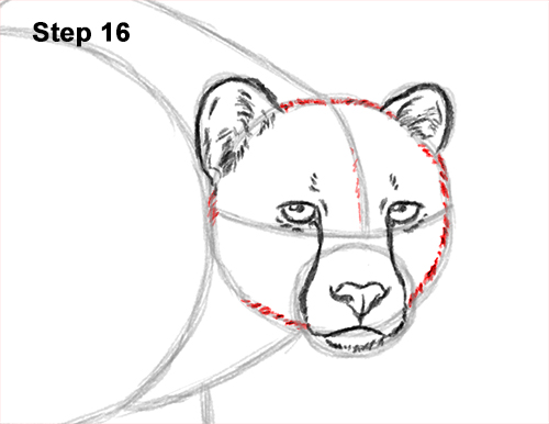How to Draw a How to Draw a King Cheetah Walking 16
