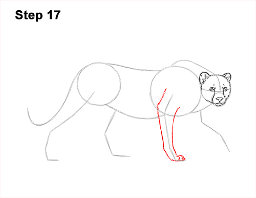 How to Draw a How to Draw a King Cheetah Walking 17