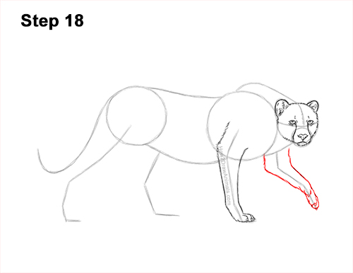 How to Draw a How to Draw a King Cheetah Walking 18