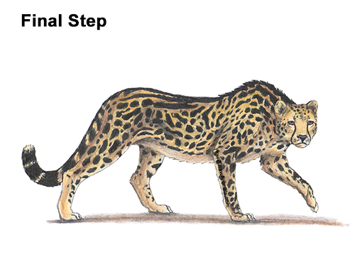 How to Draw a How to Draw a King Cheetah Color Walking