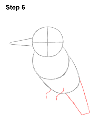 How to Draw a Belted Kingfisher Female 6