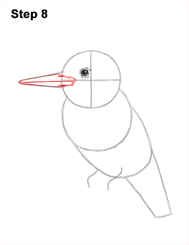 How to Draw a Belted Kingfisher Female 8