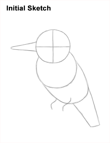How to Draw a Belted Kingfisher Female Guides Lines