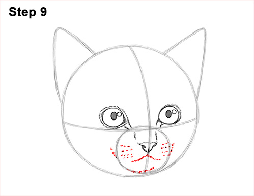 How to Draw Cute Cat Kitten Head Face Portrait 9