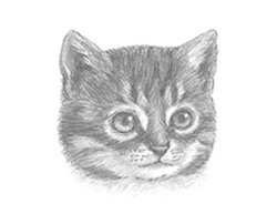 How to Draw a Cat (Tabby Kitten Head Detail)