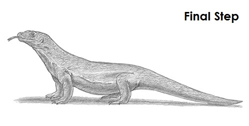 Draw Komodo Dragon Last