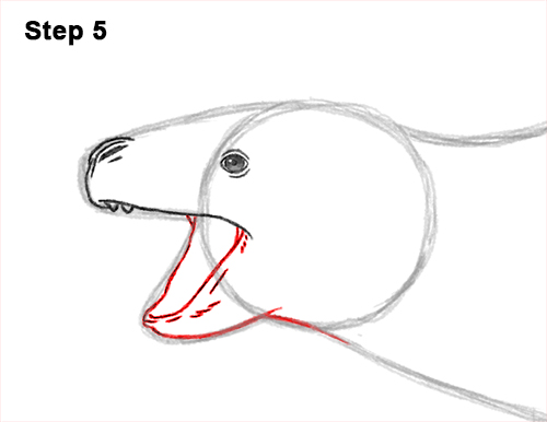 How to Draw a Sea Leopard Seal Side View 5