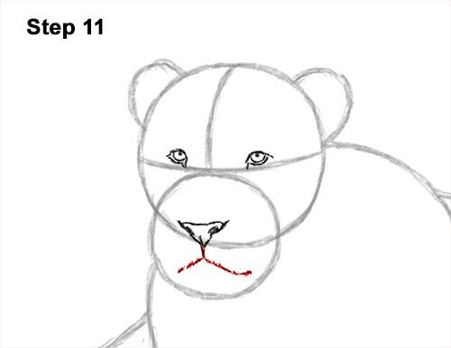 How to Draw a Lion Color Side Laying Lying Down 11