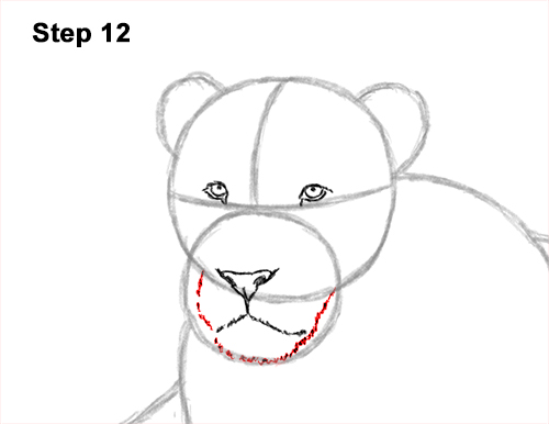 How to Draw a Lion Color Side Laying Lying Down 12