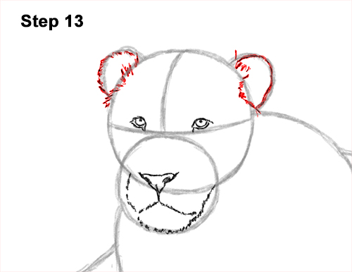 How to Draw a Lion Color Side Laying Lying Down 13