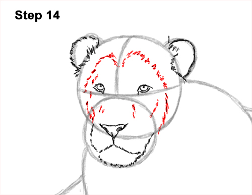 How to Draw a Lion Color Side Laying Lying Down 14