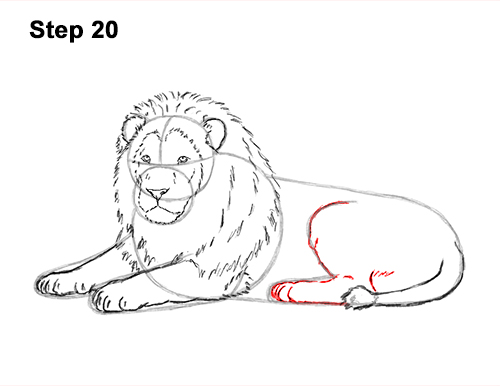 How To Draw A Lion Color Video Step By Step Pictures Check out our lion for coloring selection for the very best in unique or custom, handmade pieces from our shops. how to draw a lion color video step