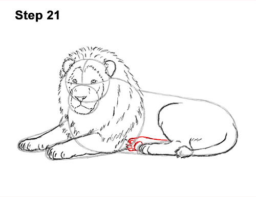 How to Draw a Lion Color Side Laying Lying Down 21