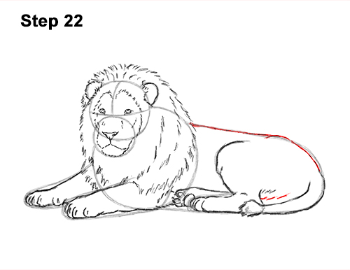 How to Draw a Lion Color Side Laying Lying Down 22