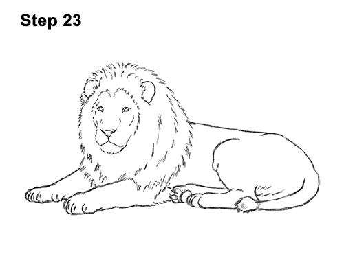 How to Draw a Lion Color Side Laying Lying Down 23