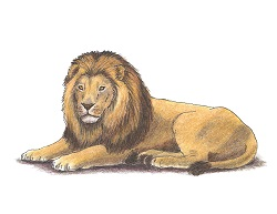 How to Draw a Lion Laying Down Color