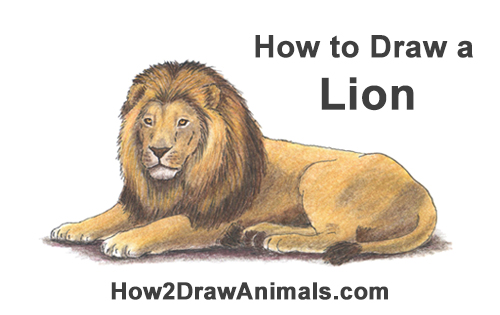 How to Draw a Lion Color Side Laying Lying Down
