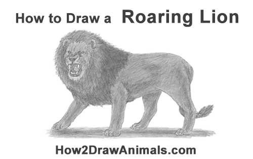 How to Draw a Roaring Lion