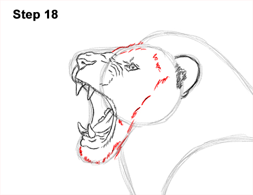 How to Draw a Lion Roar Roaring Side Color 18