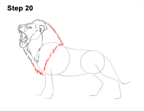 How to Draw a Lion Roar Roaring Side Color 20
