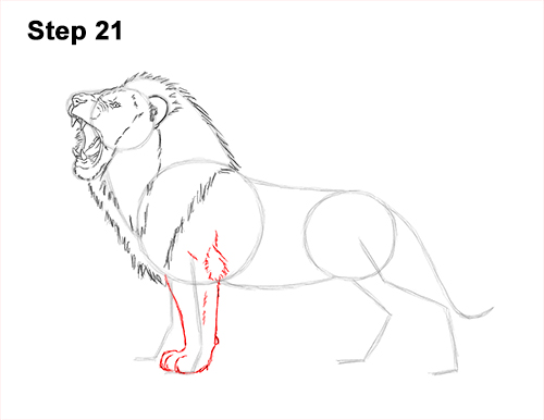 How to Draw a Lion Roar Roaring Side Color 21