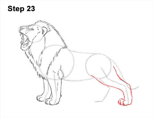 How to Draw a Lion Roar Roaring Side Color 23