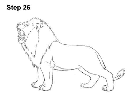 How to Draw a Lion Roar Roaring Side Color 26