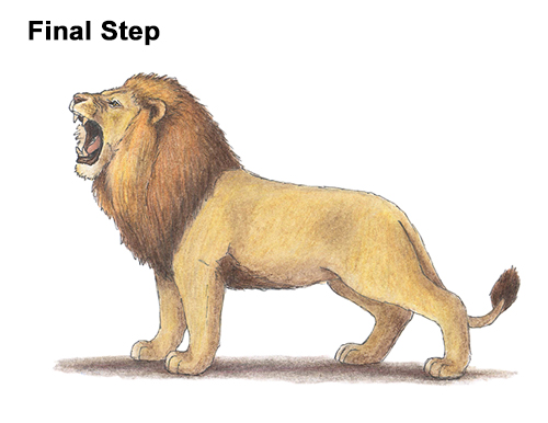 How to Draw a Lion Roar Roaring Side Color